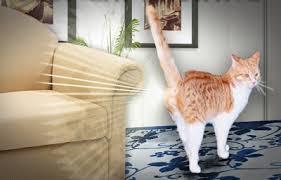 Gatos e Pulverização