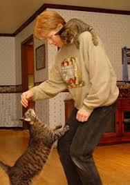 3 dicas essenciais sobre Gatos