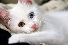 Gatos da Criatura ao Criador