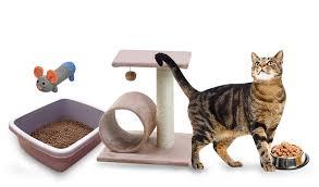 14 Vidas de Seu Gato