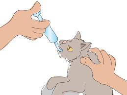 Gatos e Comprimidos